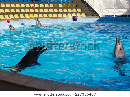 Four dolphins whales play balls - stock photo