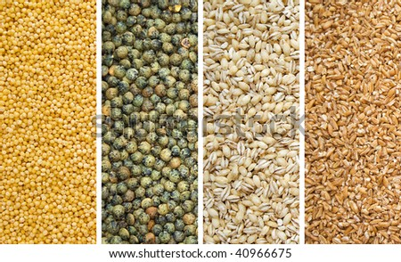 Four Dried Grains Millet Lentils Barley and Bulgur Wheat