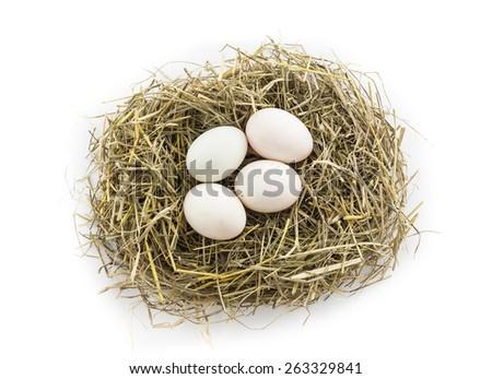 four duck egg in nest - stock photo