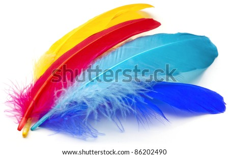 Four feathers of different colors on a white background. - stock photo