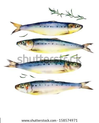 Four fish on white background - stock photo