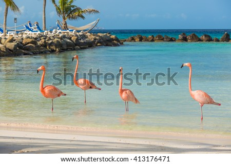 Four flamingos on the beach