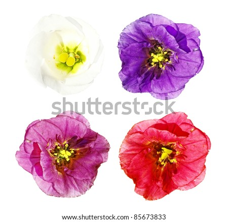 Four flowers (white, pink, red and violet) isolated on a white background - stock photo