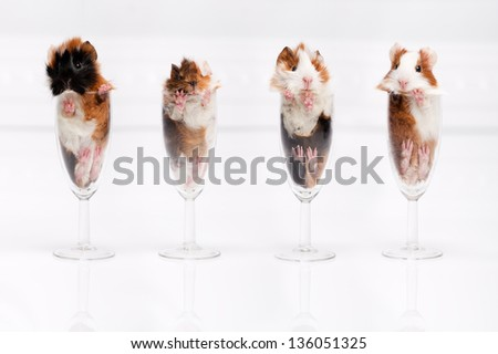 Four fluffy funny hamster into a shot glasses - stock photo