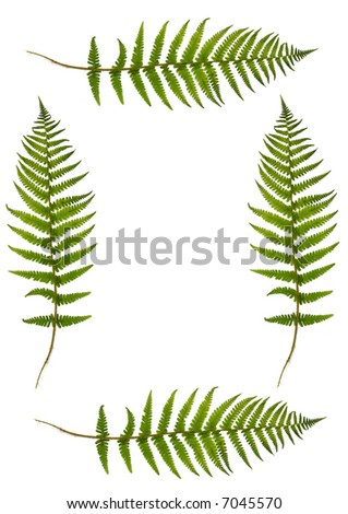 Four green fern leaves creating a border with a central blank section,  over white. - stock photo