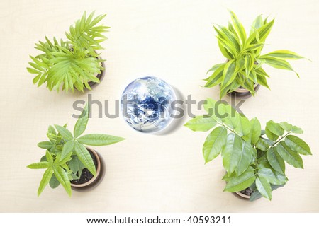 Four green ornamental plants on the floor and globe.