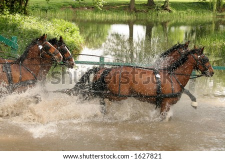 Four horces running throuh the river - stock photo