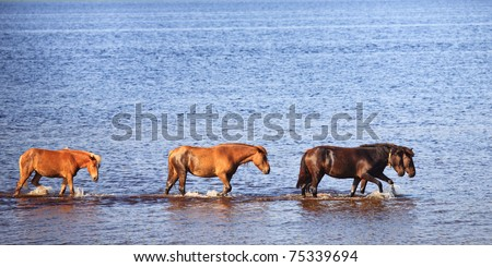 Four horses go one for another on blue water of lake - stock photo