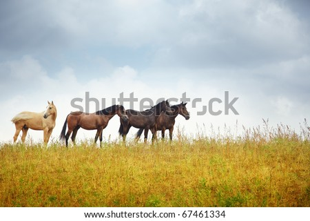 Four horses in the steppe. Kazakhstan. Middle Asia. Natural light and colors - stock photo
