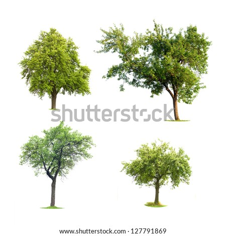 Four isolated trees ont a white background - stock photo