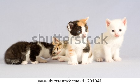 four kitten standing on the floor, isolated
