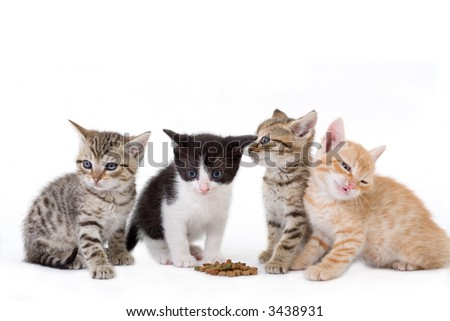 four kittens sits behind a dry food. - stock photo