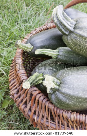 Four large courgettes lie in a basket - stock photo