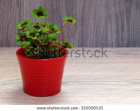 Four-leaf clover 1 - stock photo