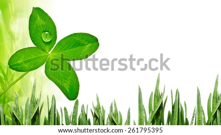 four leaf clover and grass background  - stock photo