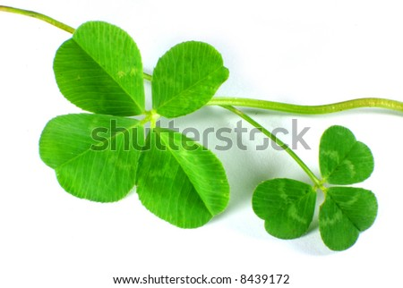 Four Leaf Clover and three Leaf Clover isolated on white - stock photo