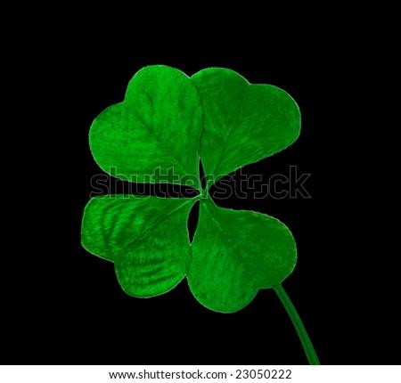 Four leaf clover on black background - stock photo