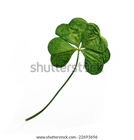 Four leaf clover on white background - stock photo