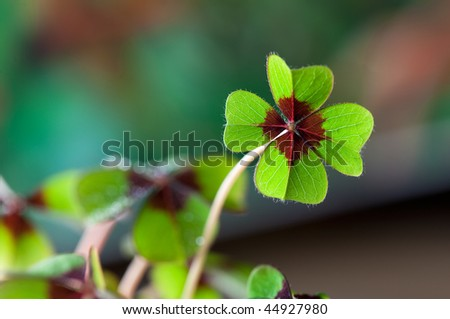 Four - Leaved Clover, green with red center