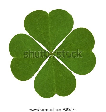 four-leaved clover on white background - stock photo