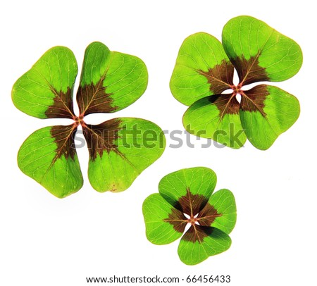 Four Leaves Clovers Pattern isolated on white background - stock photo