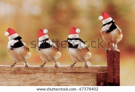 four little black-capped chickadees  perch on a bench wearing their santa hats - stock photo