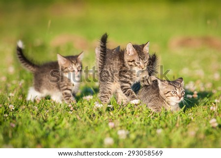Four little tabby kittens playing outdoors