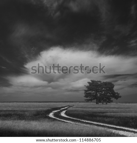 Four lonely trees in field, Ukraine - stock photo