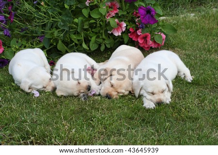 Four lovely puppies sleeping on the garden - stock photo