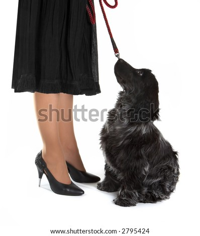 Four month old cocker spaniel puppy dog looking up towards a lady in black, with stiletto high heels - stock photo