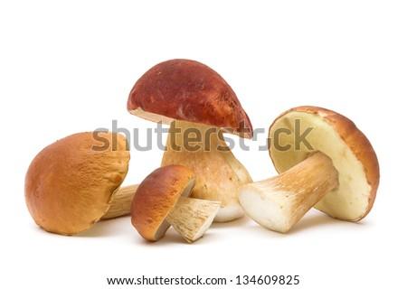 four mushroom close-up isolated on white background. horizontal photo. - stock photo