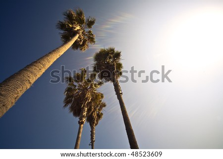 Four Palm Trees In The California Sun - stock photo
