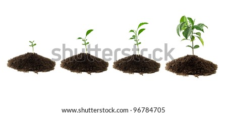 four plants lemon green and soil - stock photo