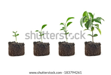 four plants lemon green in soil  - stock photo