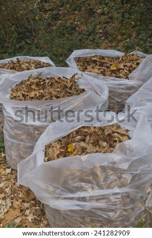 Four plastic trash bags filled with autumn oak tree leaves - stock photo
