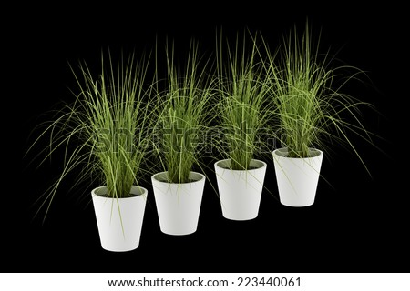 four potted houseplants isolated on black background - stock photo