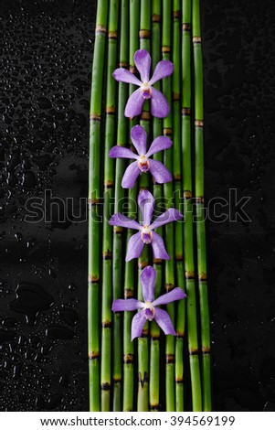 Four purple orchid with bamboo grove on black background - stock photo
