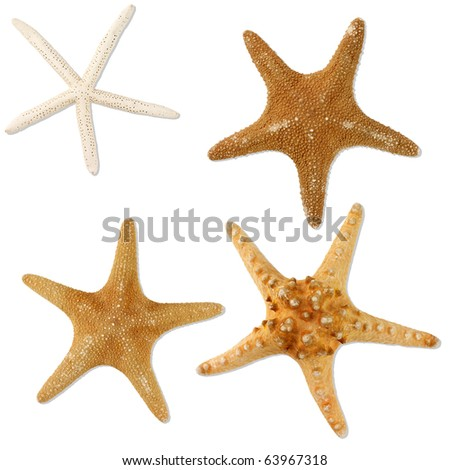 Four Sea-stars isolated on white, clipping path included - stock photo