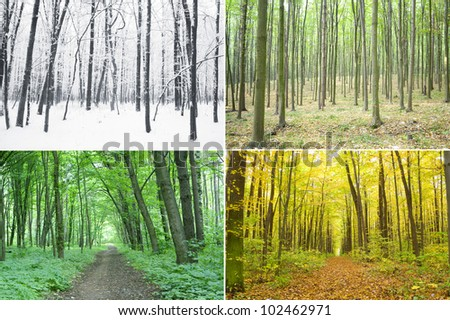 Four season of year in the wood - stock photo