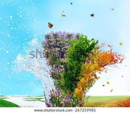 Four season tree - stock photo