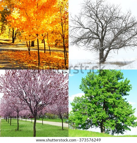 Four seasons collage: several photos of beautiful trees at different time of the year - winter spring, summer, autumn - stock photo