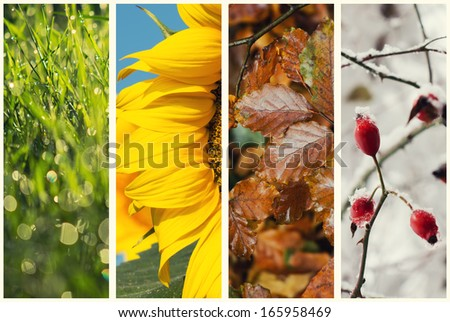 Four seasons collage:  Spring, Summer, Autumn, Winter - stock photo
