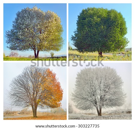 Four seasons for a lonely tree - stock photo