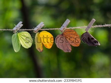 Four seasons leaves - stock photo