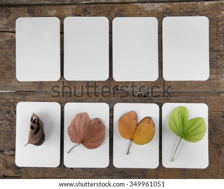 Four seasons Leaves