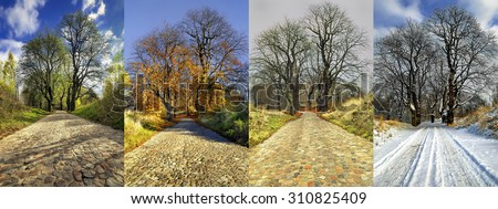 Four Seasons of a Row of  Trees - stock photo