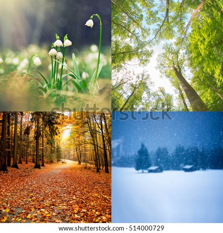 The Four Seasons Of The Year Cycle