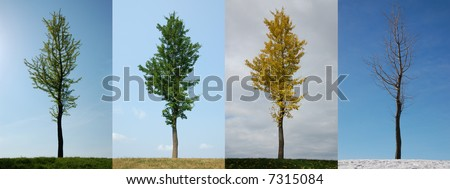 Four seasons.  Same tree in Spring, Summer, Autumn and Winter.  Individual images also available in my portfolio. - stock photo