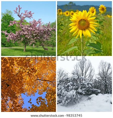 Four seasons. Spring, summer, autumn and winter landscapes. - stock photo