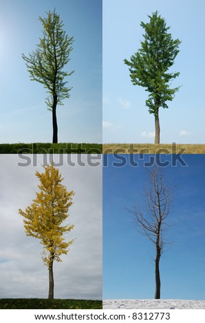 Four seasons: Spring, Summer, Autumn, Winter.  Canada.